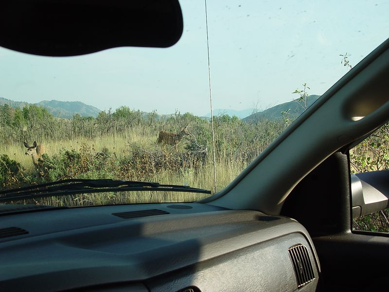 Here we are driving into Paridgin Lake, State Park, notice the Deer.