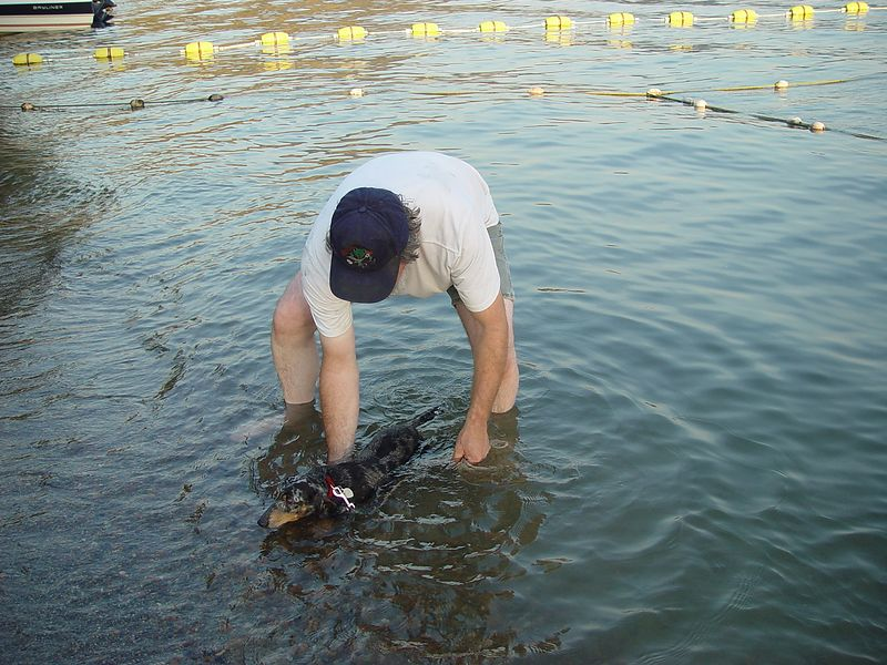 Dave giving the Winer Dog a bath in the lake.