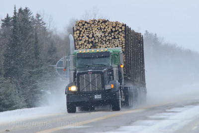 Logs Going To Market