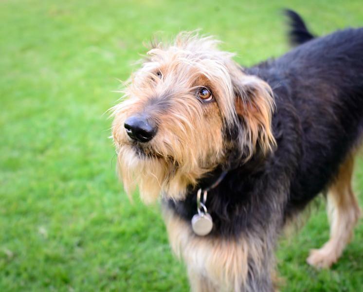 Trudy's Pups-56