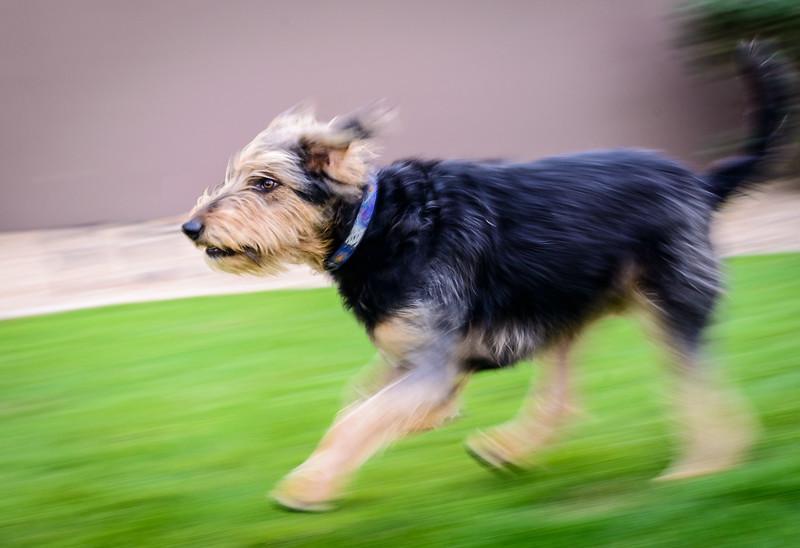 Trudy's Pups-45-Edit