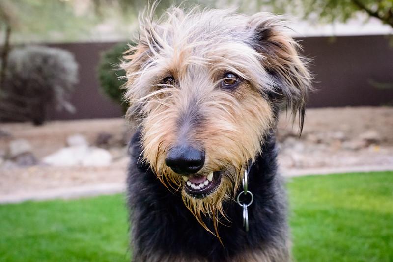 Trudy's Pups-84
