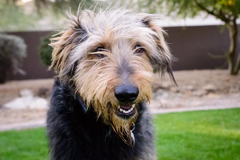 Trudy's Pups-83