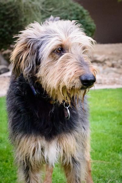 Trudy's Pups-82