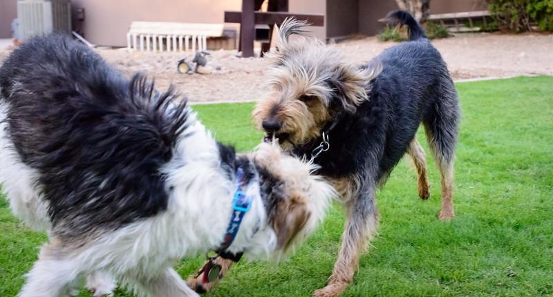 Trudy's Pups-89