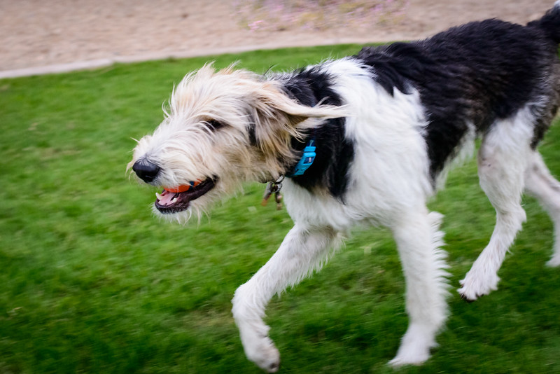 Trudy's Pups-62