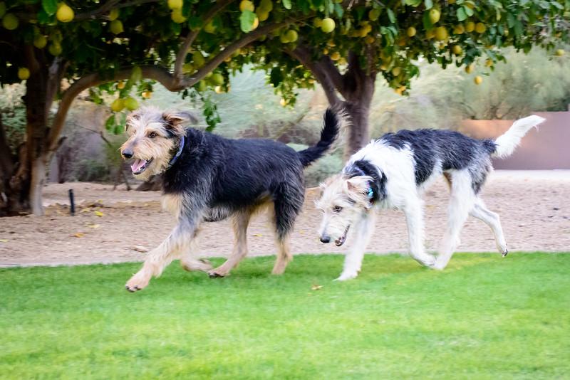 Trudy's Pups-72