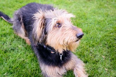 Trudy's Pups-51-Edit