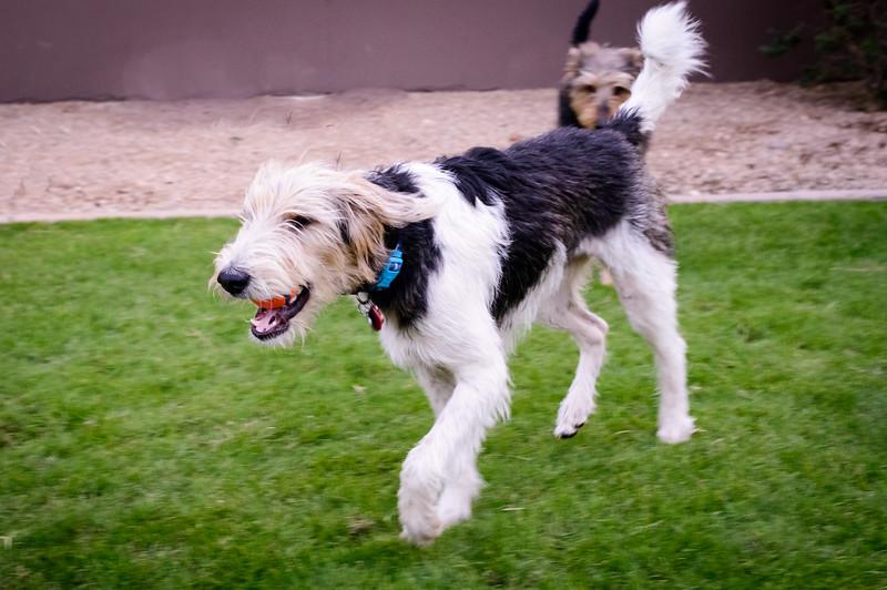 Trudy's Pups-61-Edit