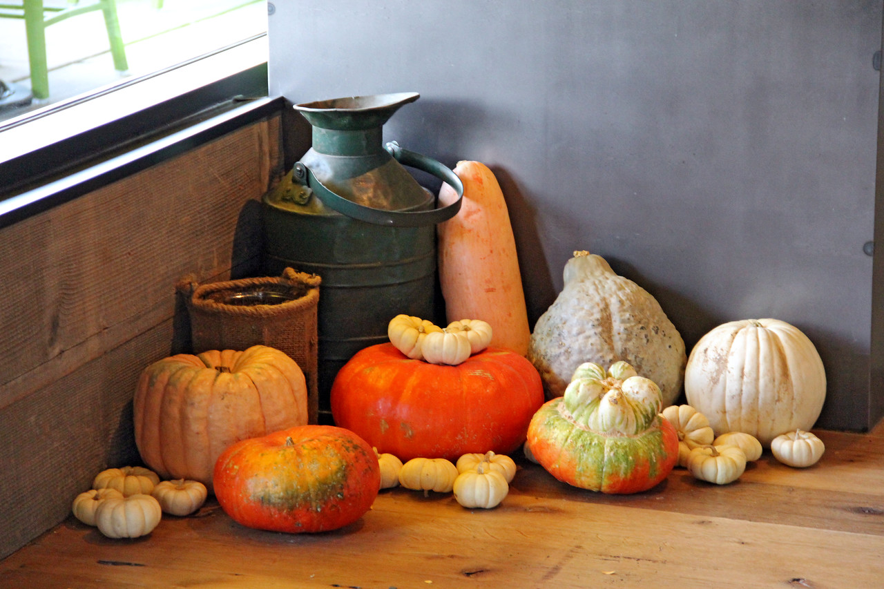 Seasonal pumpkins and gourds decorate the front entrance of the new True Food Kitchen in Denver