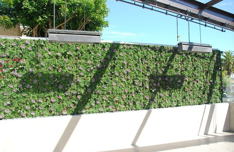 "Completed succulent ""living wall"" at Dr. Weil's restaurant. The living patio wall at the Newport Beach, Calif., True Food Kitchen - planted with Delosperma cooperi (Hardy Ice Plant), Haworthia attenuata (Zebra Plant), Sanseveria zeylanica (Devil's Tongue), and Sempervivum (Liveforever/Houseleek)."