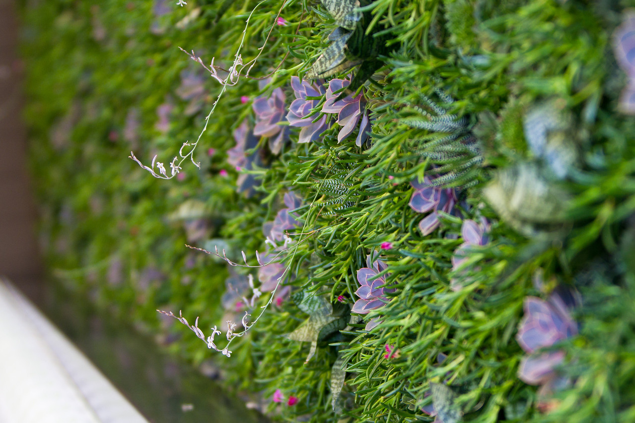 The living wall, constructed by Plant Solutions, in Scottsdale, Ariz.