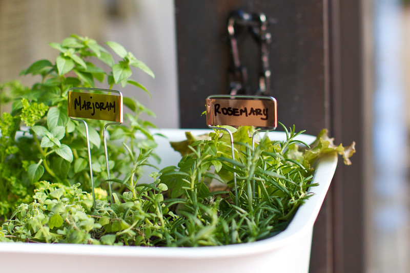 Portable herb basket with marjoram and rosemary in front of the new Scottsdale True Food Kitchen.
