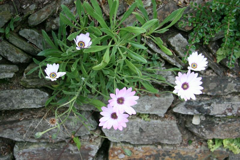 English flowers......