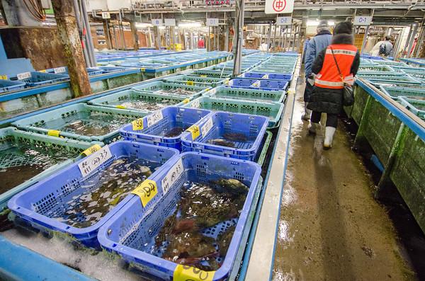 Live fish at Tsukiji Fish Market, Tokyo