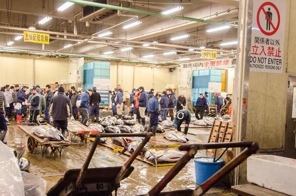 Fresh tuna auction - Tsukiji Fish Market, Tokyo
