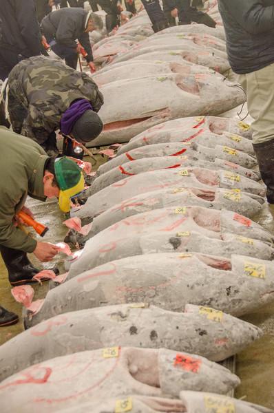 Frozen tuna auction inspection - Tsukiji Fish Market, Tokyo