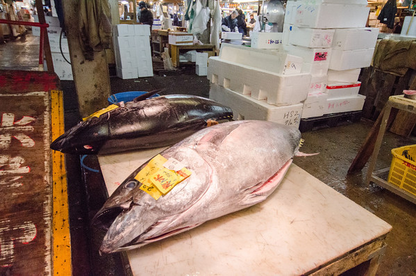 Bluefin tuna at the Intermediate wholesaler market - Tsukiji Fish Market, Tokyo