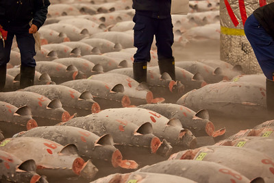 Tuna Auction