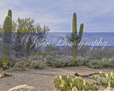 Desert 2018 -852-Pano