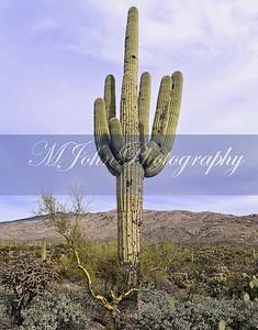 Desert 2018 -790 copy