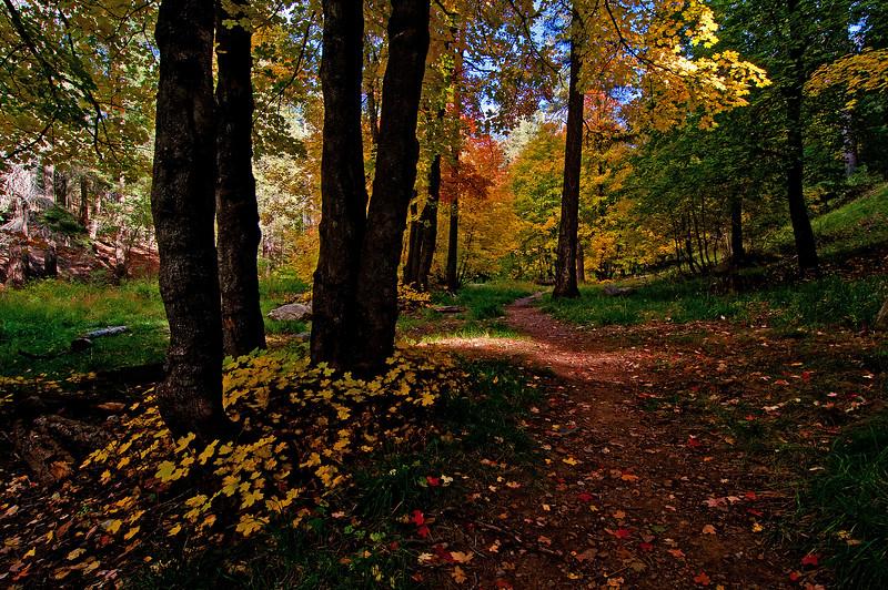 Bear Wallow Autumn