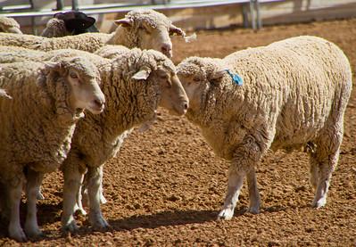 Tucson Rodeo 29 Feb 2011 I got a secret