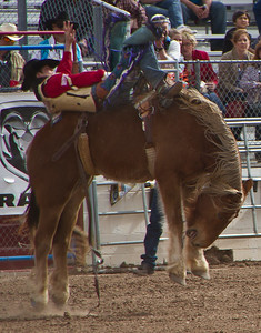 Tucson Rodeo 29 Feb 2011 Hang On Cowboy
