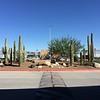 Arrived in Tucson! Cacti!