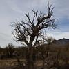 Catalina State Park - Canyon Loop Trail Tucson, AZ