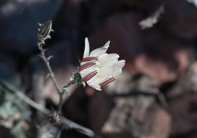 Wildflowers 2012