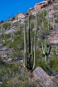 CB_Tucson15-49