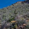 CB_Tucson15-5