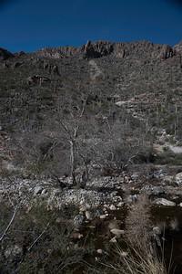 CB_Tucson15-4