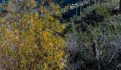 CB_Tucson15-39