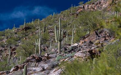 CB_Tucson15-35