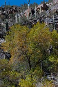 CB_Tucson15-46