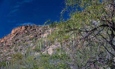 CB_Tucson15-32