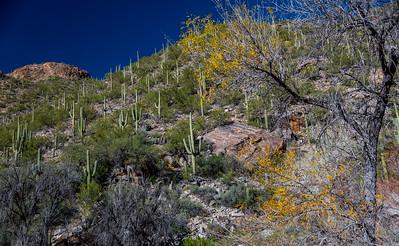 CB_Tucson15-43