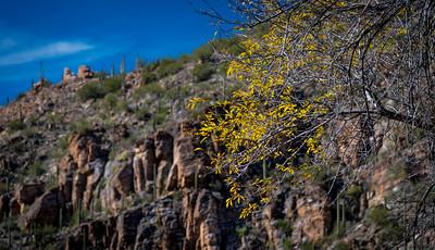 CB_Tucson15-41
