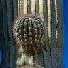 CB_Tucson15-53