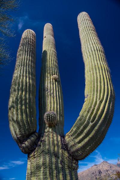 CB_Tucson15-54