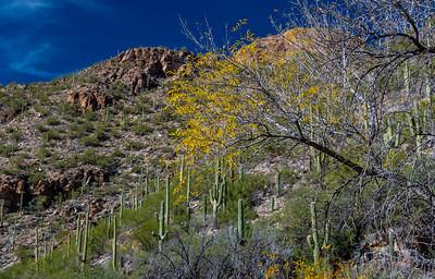CB_Tucson15-42