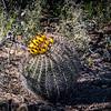 CB_Tucson15-51