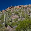 CB_Tucson15-48