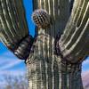 CB_Tucson15-52