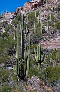 CB_Tucson15-50