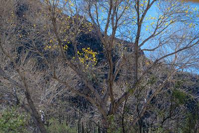 CB_Tucson15-38