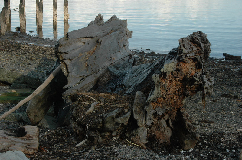 This is a section of a tree about 8 feet across and 20 feet long....located on the Anacortes beach at the site of the old Anacortes Plywwod Mill that burned to the ground, or the water I should say...the Tug Enchantress is just off-shore here..