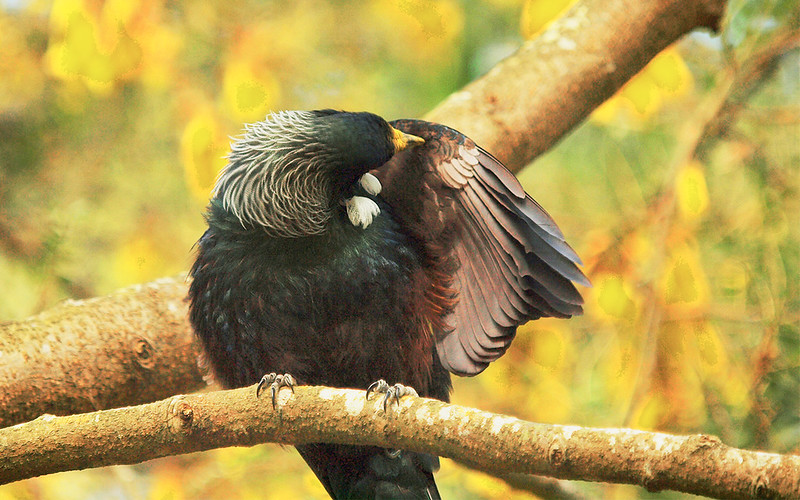 Tui Cleaning